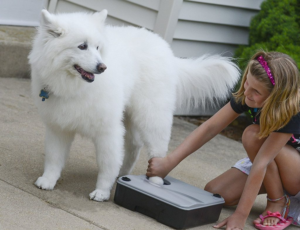 Meilleur lave patte pour chien